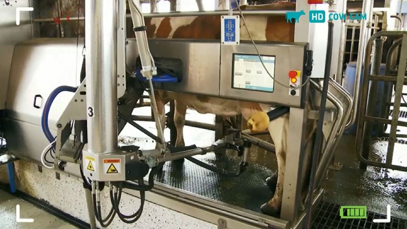 Robotic Milking 880X495