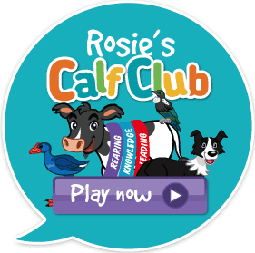 Click here to play Calf Club