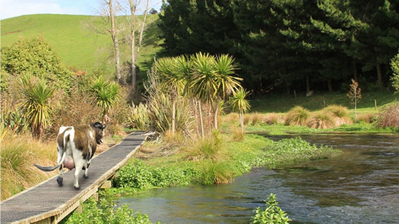 Te Waihou And Blue Spring2