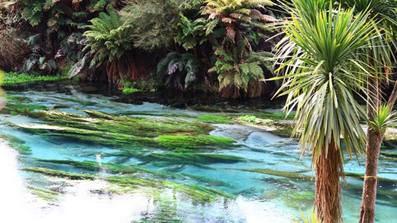 Te Waihou And Blue Spring3